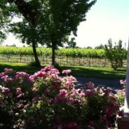 A Great Season of Weddings & Winery Events!